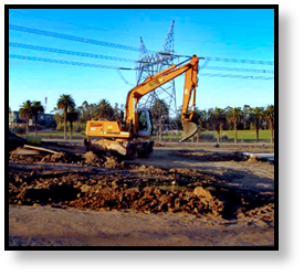 excavator-palm-trees-horizontal-240-divi.png