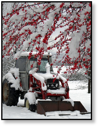 front-loader-winter-berries-snow-extreme-weather