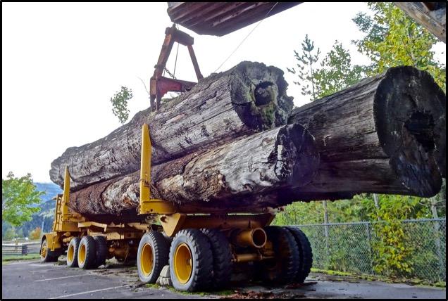 forestry-blog.jpg